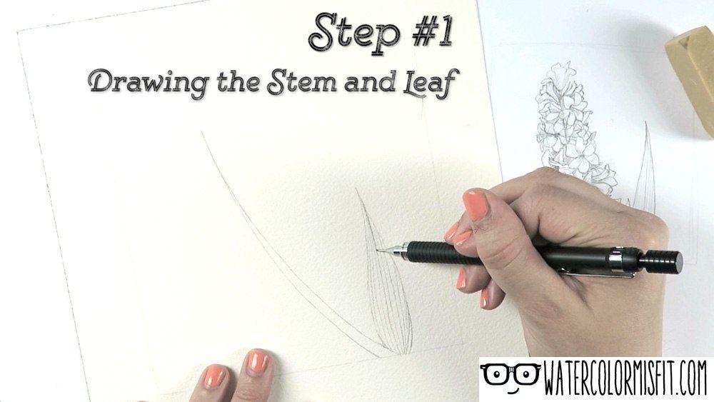 stem-and-leaf